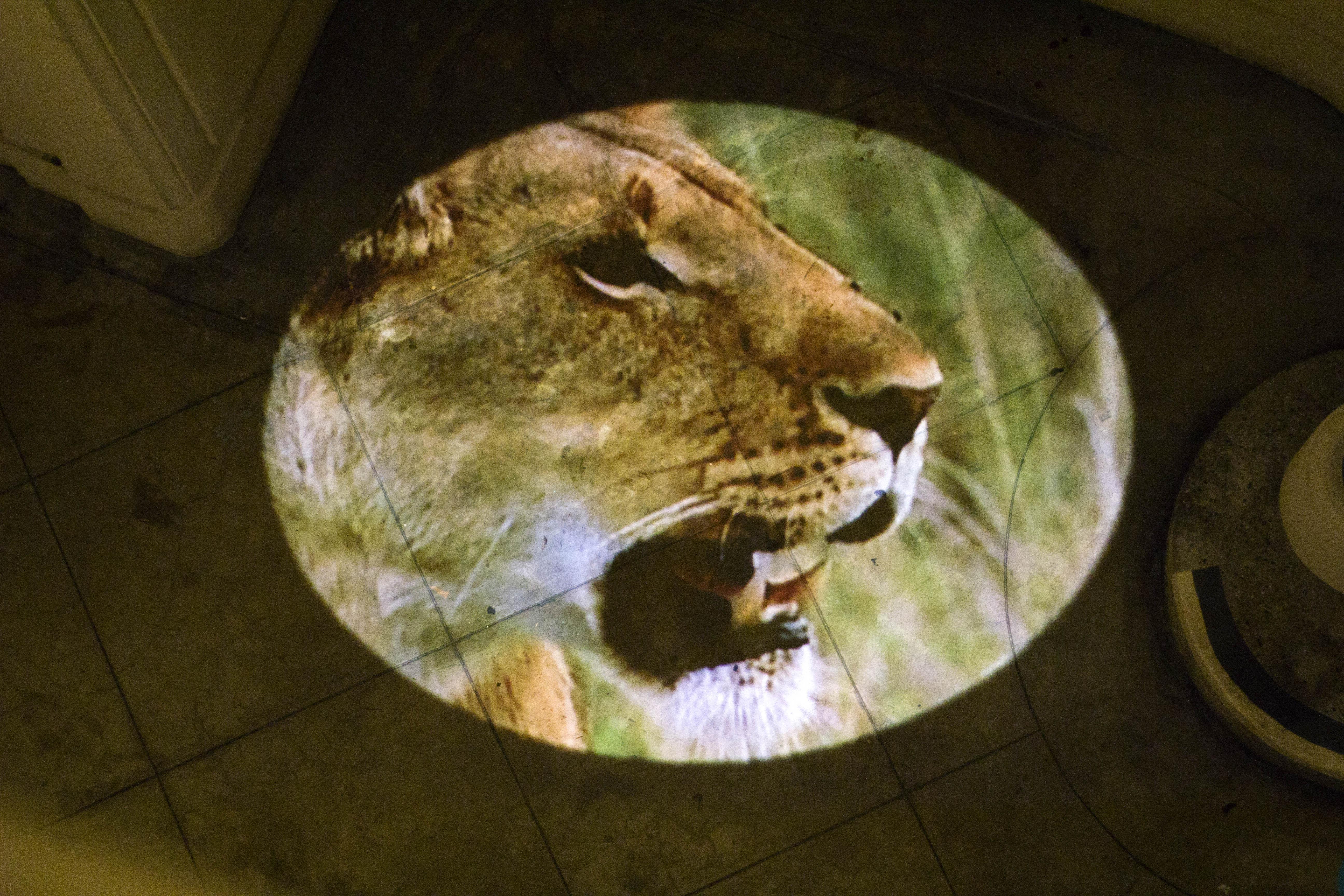 lionsweb3